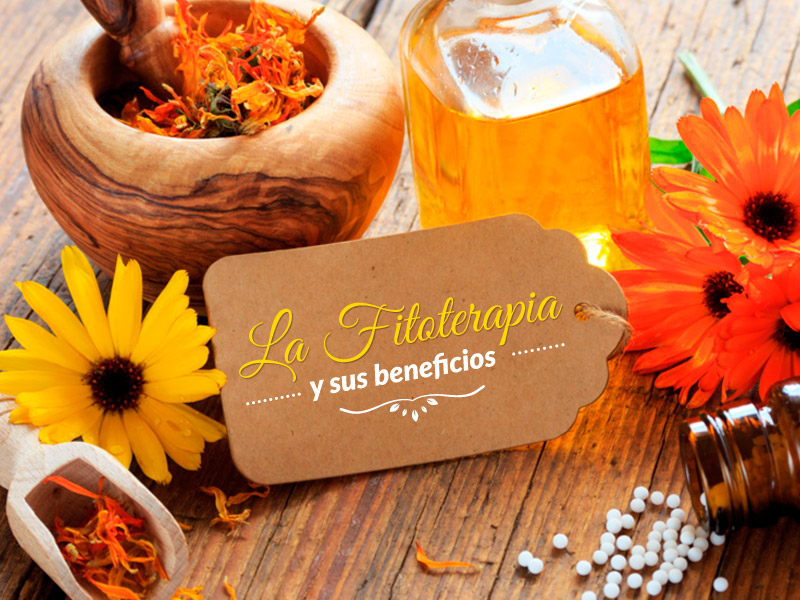 La fitoterapia y sus beneficios